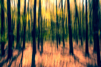 Nature's Abstract-