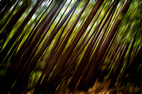 Forest in the Redwoods - Blur-